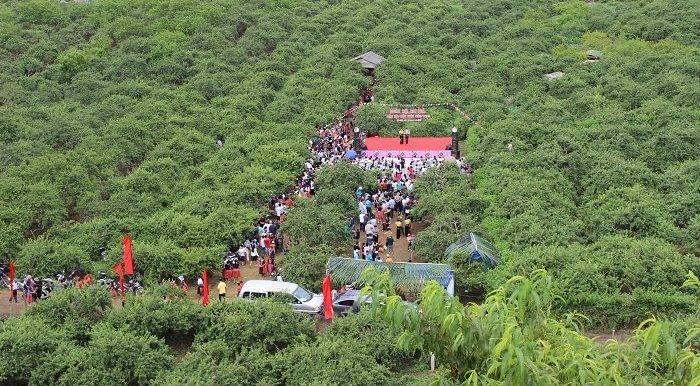 Ngày hội hải quả huyện Mộc Châu lần thứ 4 năm 2017