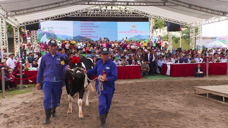 Hoa hậu bò sữa Mộc Châu 2017 – Nét đẹp văn hóa trên cao nguyên