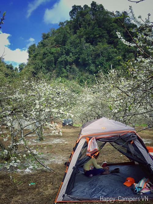 Lên Mộc Châu cắm trại giữa rừng hoa mận nở trắng trời