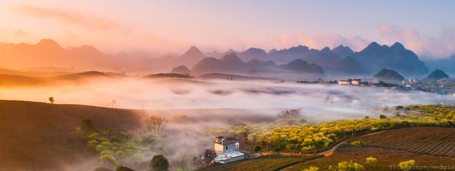 Phong cảnh thần tiên của Mộc Châu trong sương sớm