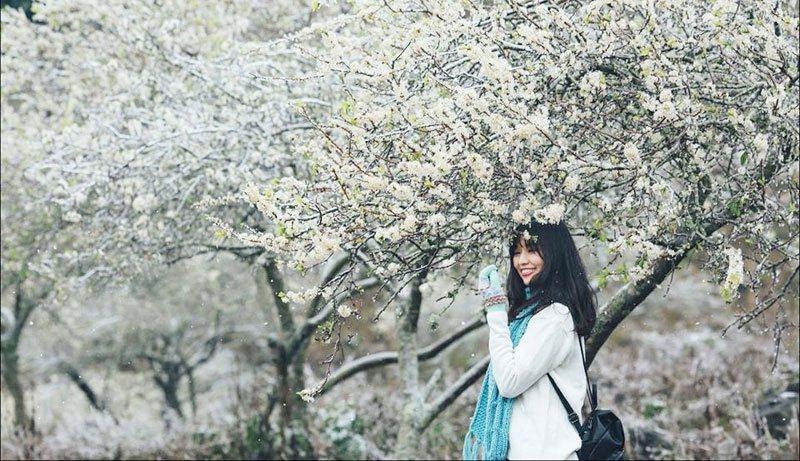 """Mùa hoa mận Mộc Châu đang nở """"trắng trời"""" rồi, xách ba lô lên thôi !"""