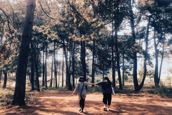 Rừng thông Bản Áng – Điểm đến lý tưởng của Mộc Châu