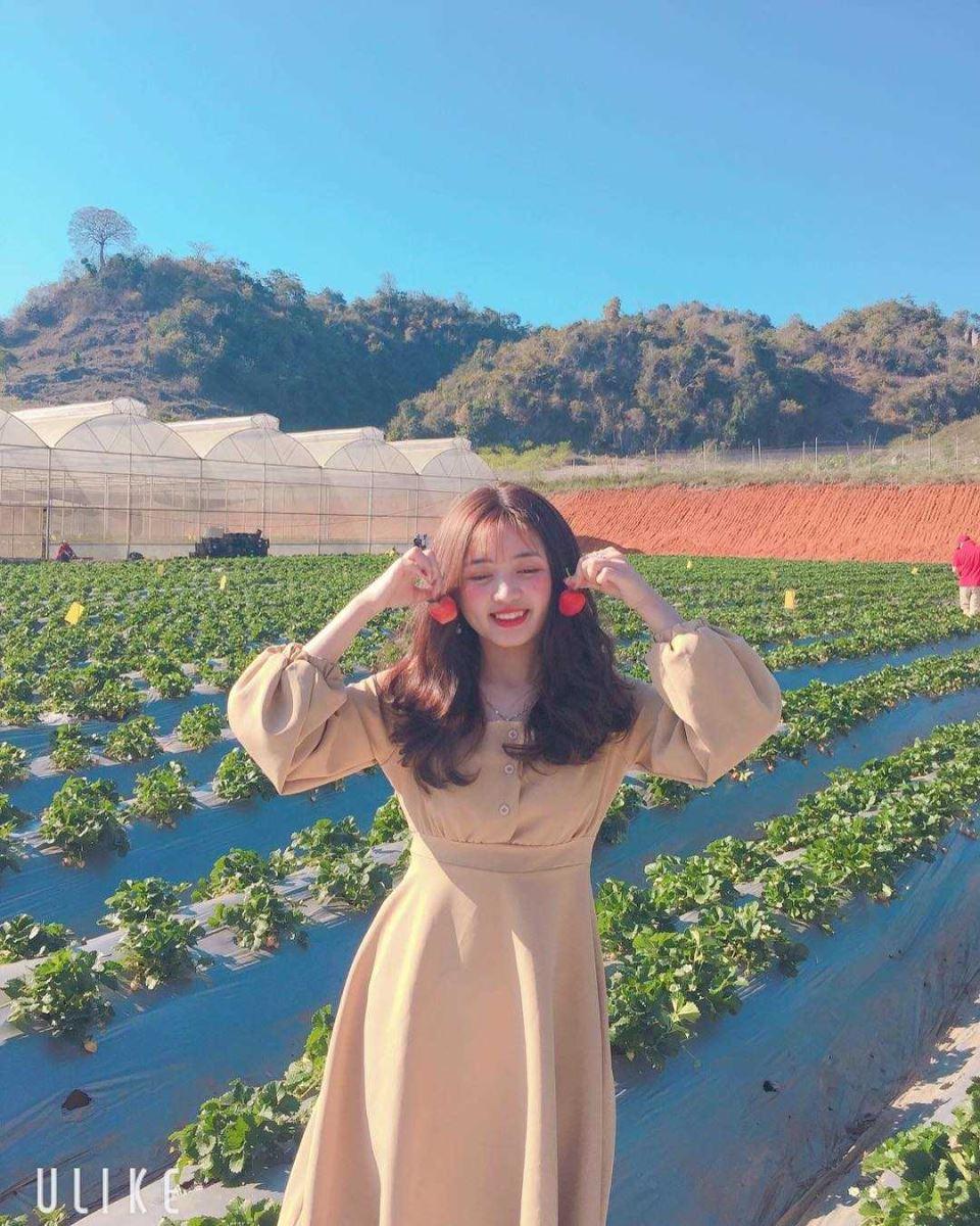 Ngây ngất với vẻ đẹp của vườn dâu tây Chimi Farm Mộc Châu