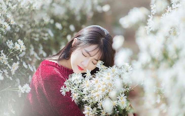vuon cuc hoa mi tren cao nguyen moc chau 9251 11 Cúc hoạ mi khoe sắc tinh khôi trên Cao nguyên Mộc Châu