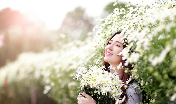 vuon cuc hoa mi tren cao nguyen moc chau 9251 12 Cúc hoạ mi khoe sắc tinh khôi trên Cao nguyên Mộc Châu