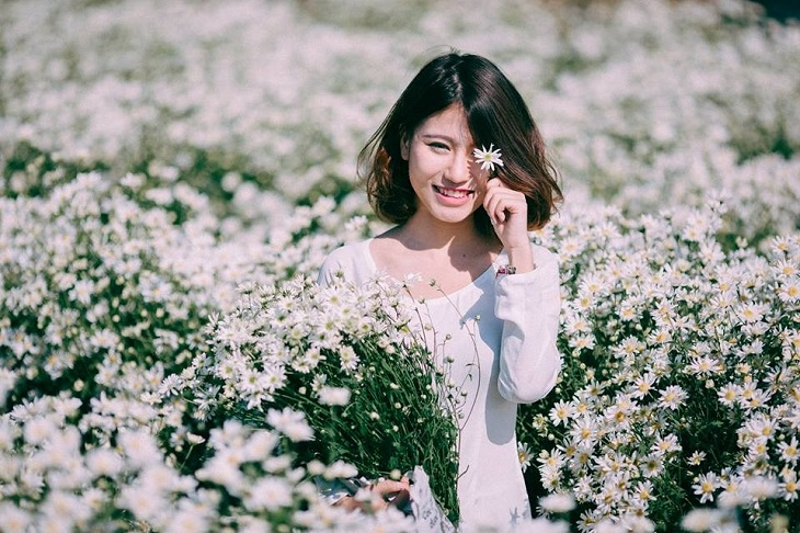 vuon cuc hoa mi tren cao nguyen moc chau 9251 2 Cúc hoạ mi khoe sắc tinh khôi trên Cao nguyên Mộc Châu