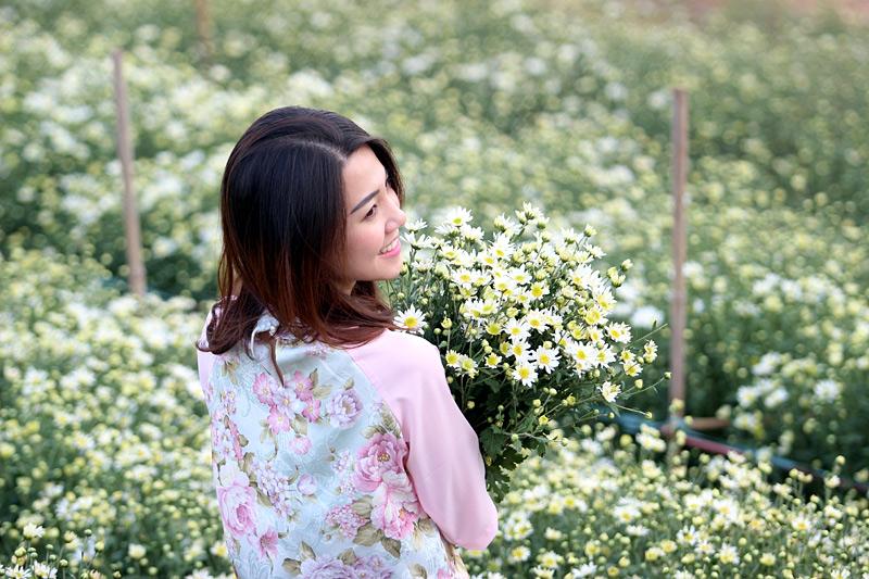 vuon cuc hoa mi tren cao nguyen moc chau 9251 9 Cúc hoạ mi khoe sắc tinh khôi trên Cao nguyên Mộc Châu